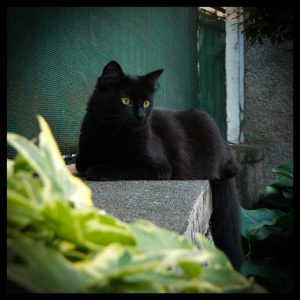 groot-cat-chat-blog-les-desirs-d-elisa
