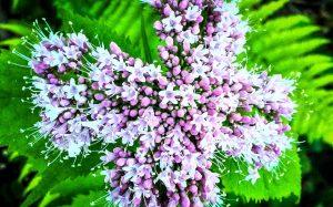 fleur-croix-3-Essential-elements-dans-ma-salle-de-bain-blog-les-desirs-d-elisa